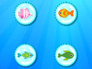 Color Fish Quest